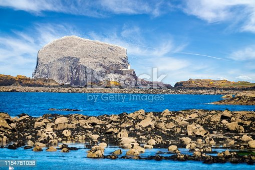 Bass Rock, Colony of gannets, North Berwick, Scotland,UK