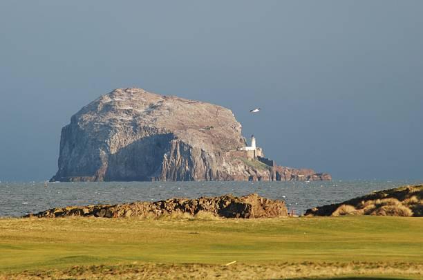 bass rock fro glen golf club - northern gannet stockfoto's en -beelden