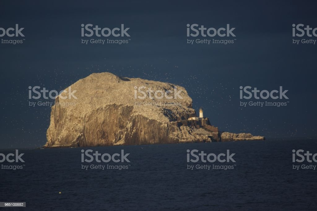 Bass Rock royalty-free stock photo