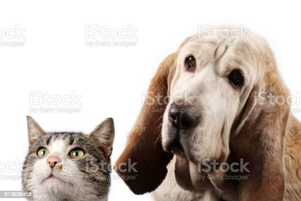 Basset hound dog and domestic cat watching picture id913638458?b=1&k=6&m=913638458&s=612x612&h=c8ivquzeh fyj1fxt vu4dsyjp5tbvpwob iisi54h4=