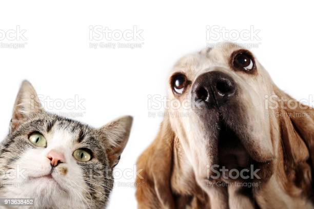 Basset hound dog and kitten are watching picture id913638452?b=1&k=6&m=913638452&s=612x612&h=8ie dyzgpod70 sfptjw5 rswbeyz9ik38ae5gginqg=