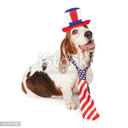 istock Basset Hound on Fourth of July 517873267