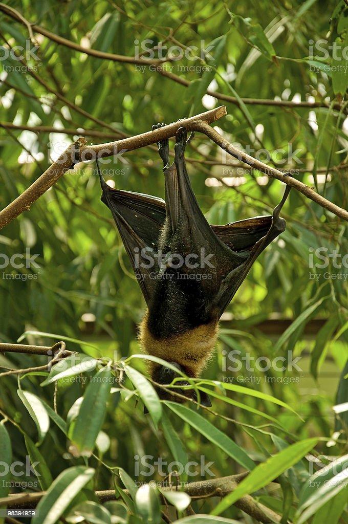 Bat between branchees royalty-free stock photo