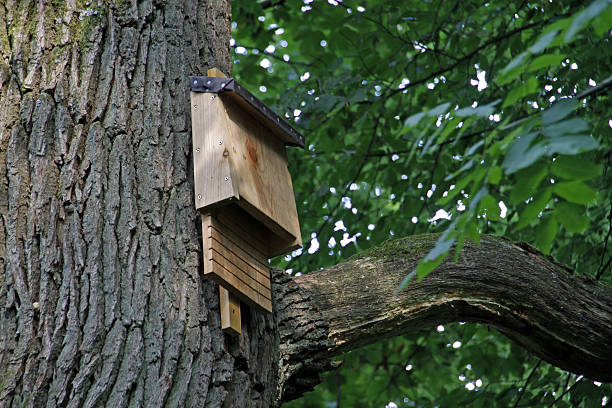 Bat box auf einem Baum – Foto