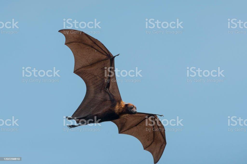 中国 コウモリ コロナ