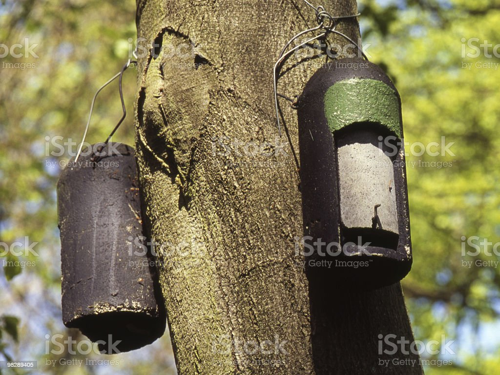 Bat nesting / roosting boxes in woodland royalty-free stock photo