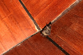 istock Bat on the wooden ceiling 823661442