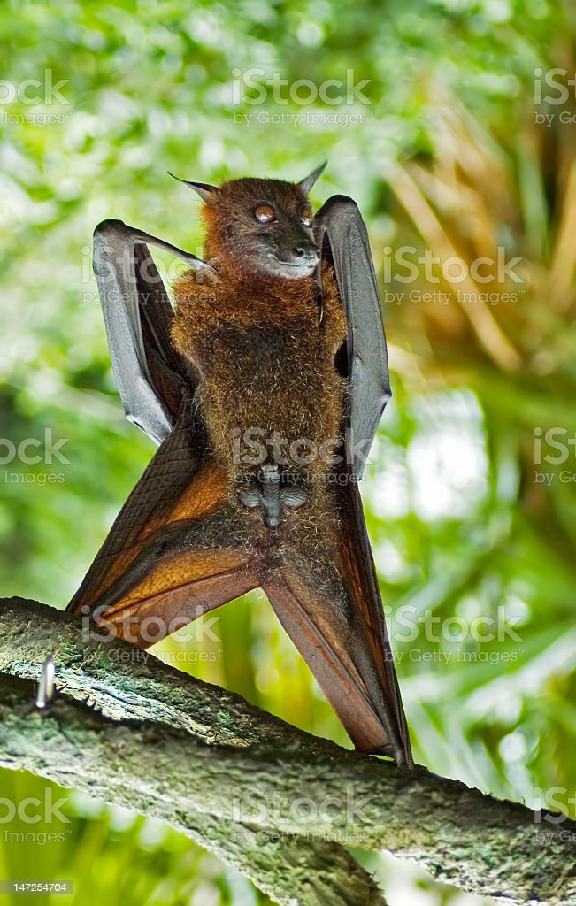 bat(man) stock photo