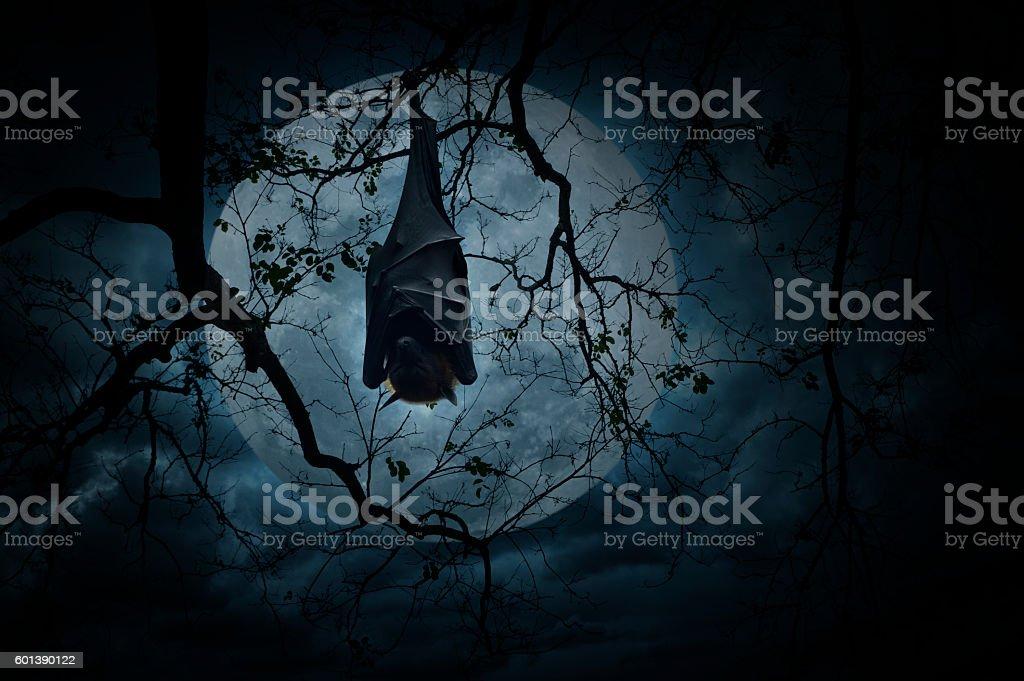 Bat sleep and hang on dead tree, Halloween concept stock photo