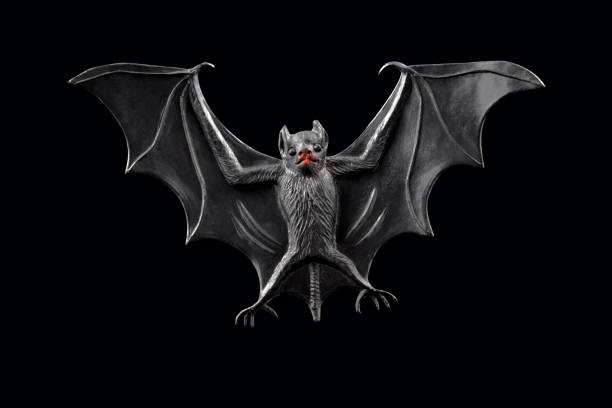 Bat stock images stock photo
