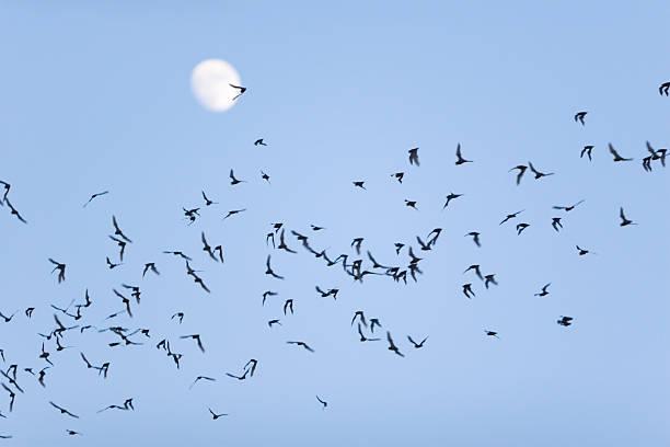 Bat Swarm stock photo