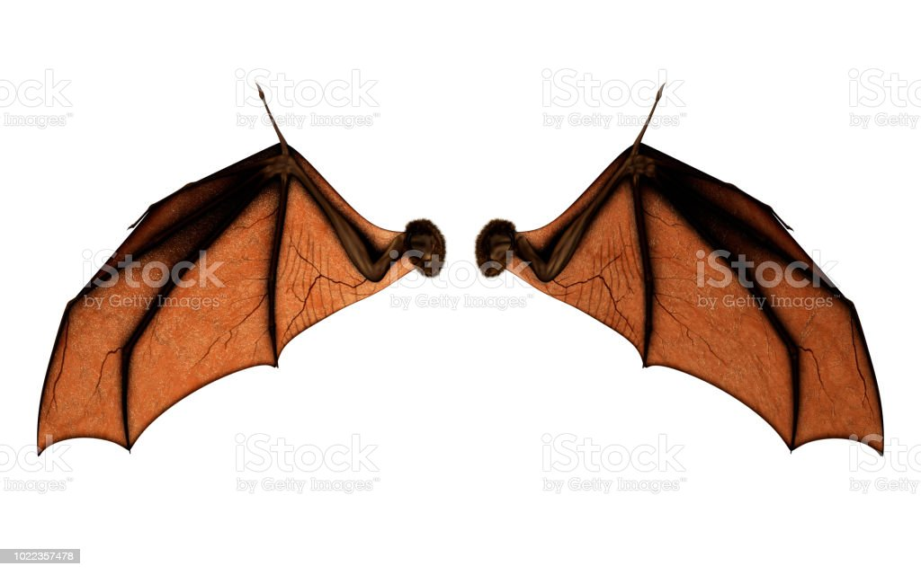Bat Wings for Costume with Clipping Path. stock photo