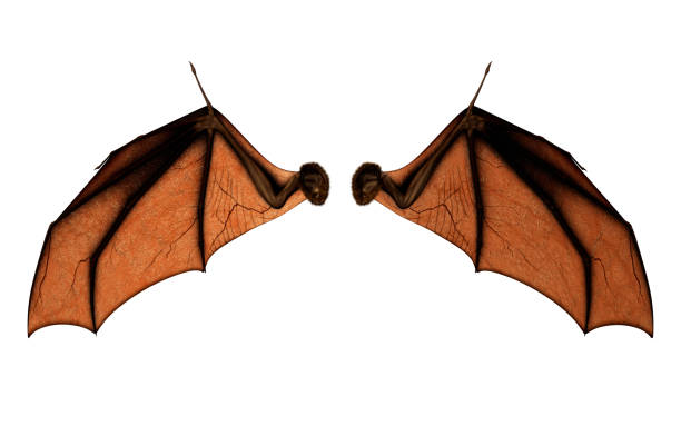bat wings for costume with clipping path. - ala di animale foto e immagini stock
