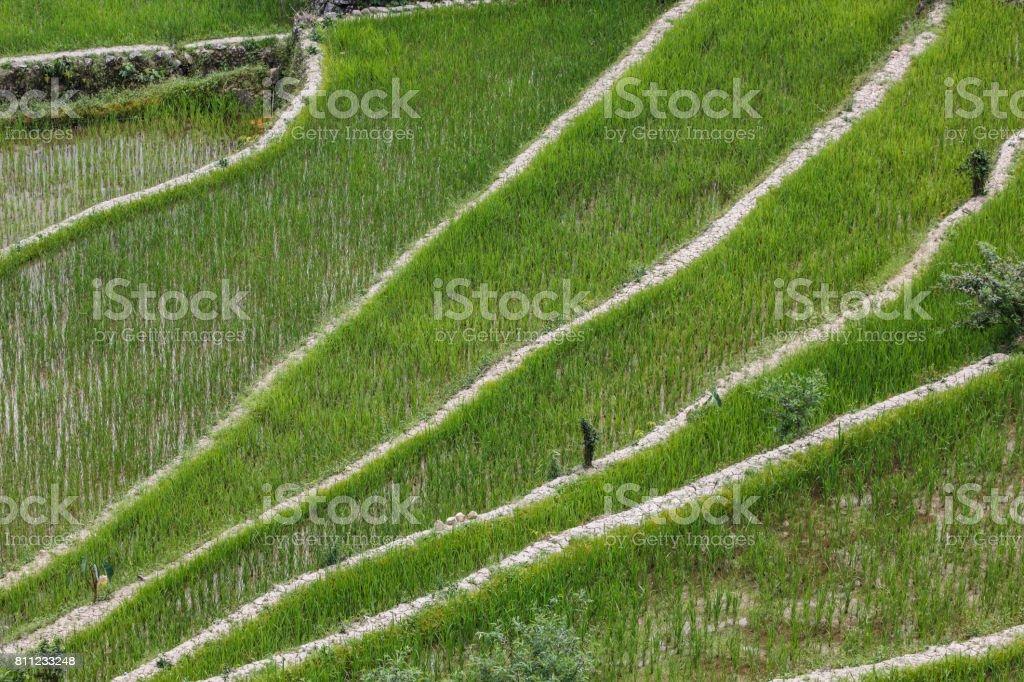 Terrazas De Campo De Arroz De Batad En La Provincia De