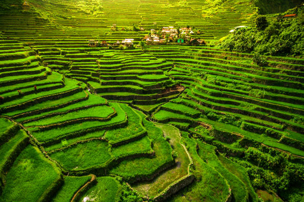 batad rice terraces, north luzon, philippines - unesco foto e immagini stock