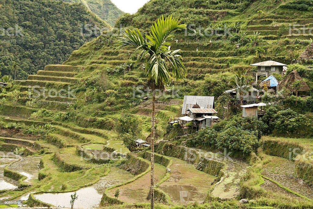 batad rice terraces north luzon philippines royalty-free stock photo