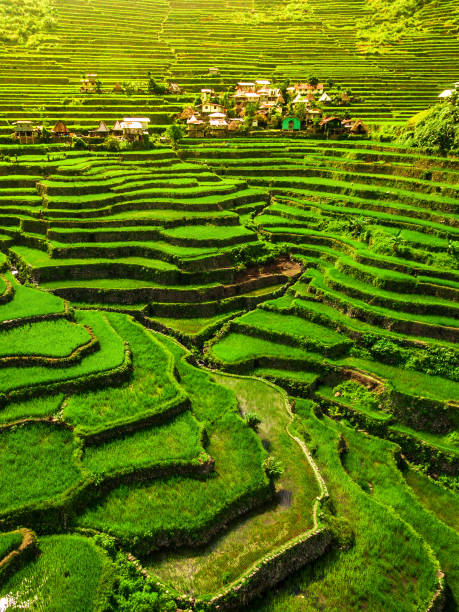 batad rice terraces, northern luzon, philippines - baguio city stock photos and pictures