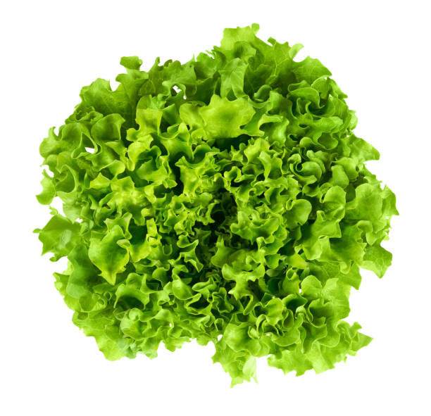 batavia head of lettuce from above on white background - lettuce stock photos and pictures