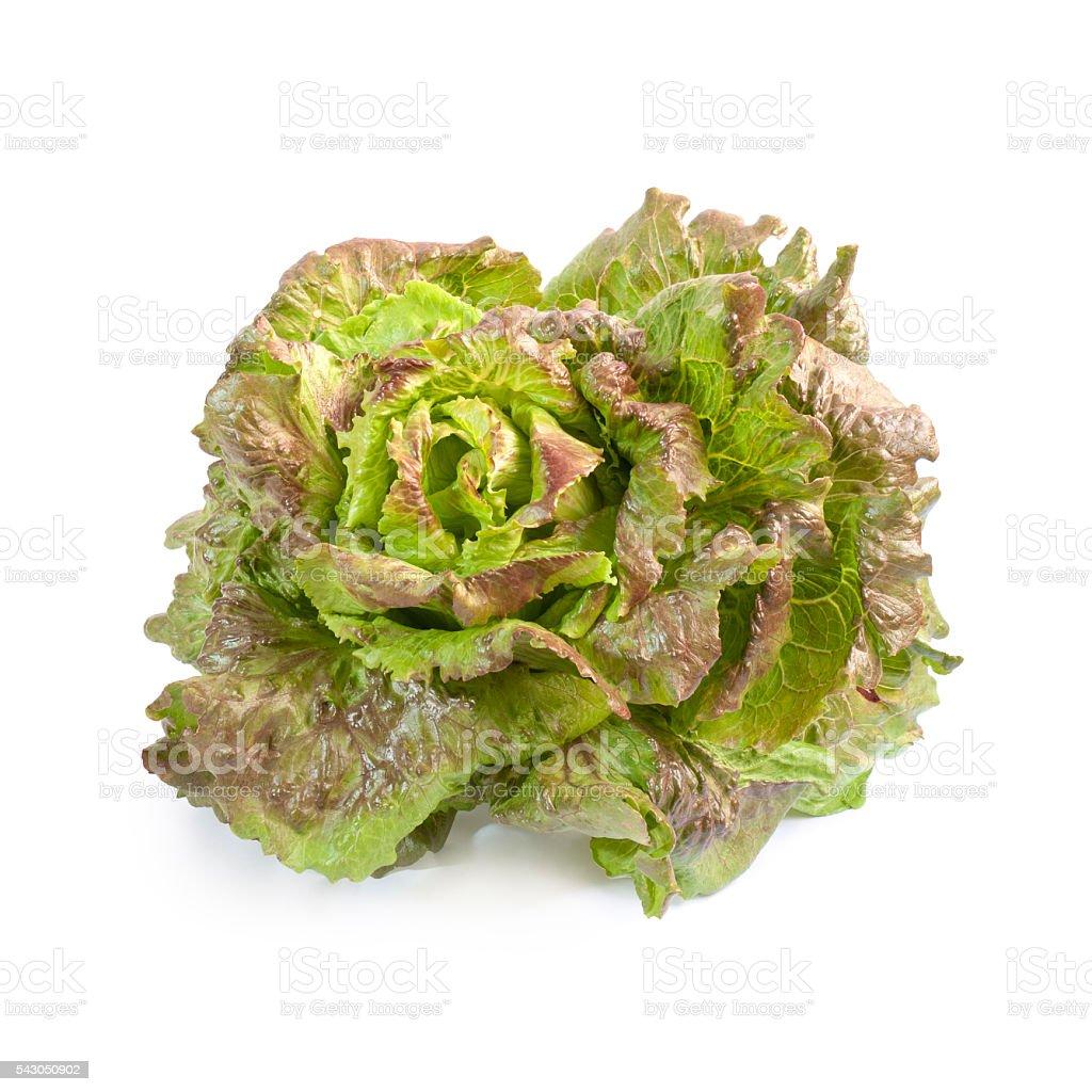 Batavia lettuce isolated - Photo