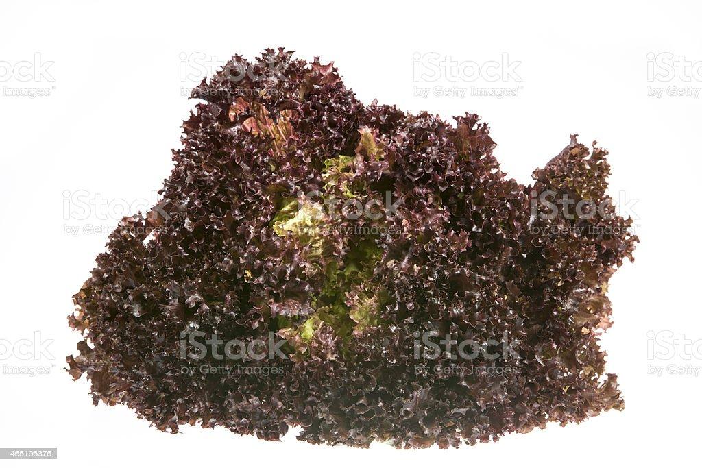 Batavia salade - Photo