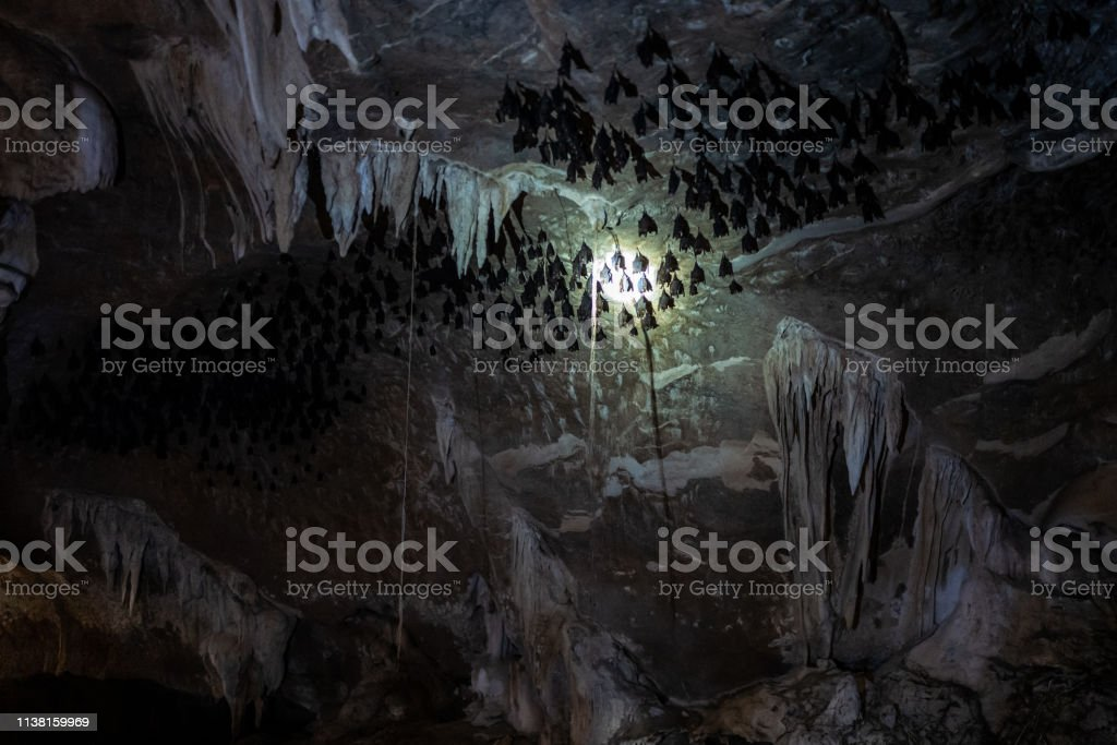 A batcave at the Kilim Karst Geoforest Park in Langkawi, Malaysia. stock photo