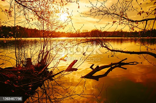 Orange beautiful sunset and trees over lake water, sun and sunlight reflection