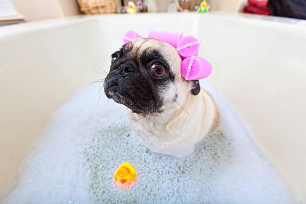 L'heure du bain - Photo