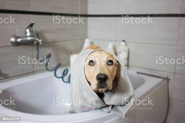 Bathing a dog picture id945432028?b=1&k=6&m=945432028&s=612x612&h=jksjogovbe9bofrwu 5nzka8zq6tj ovwgtoho9dqaq=