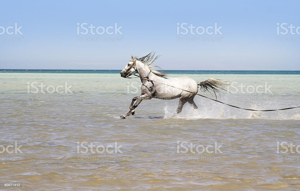 Bathing of a horse royalty-free stock photo