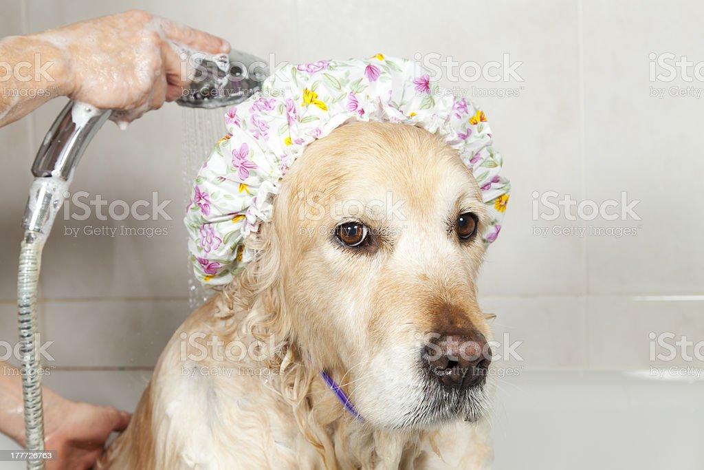 Bathroom to a dog stock photo