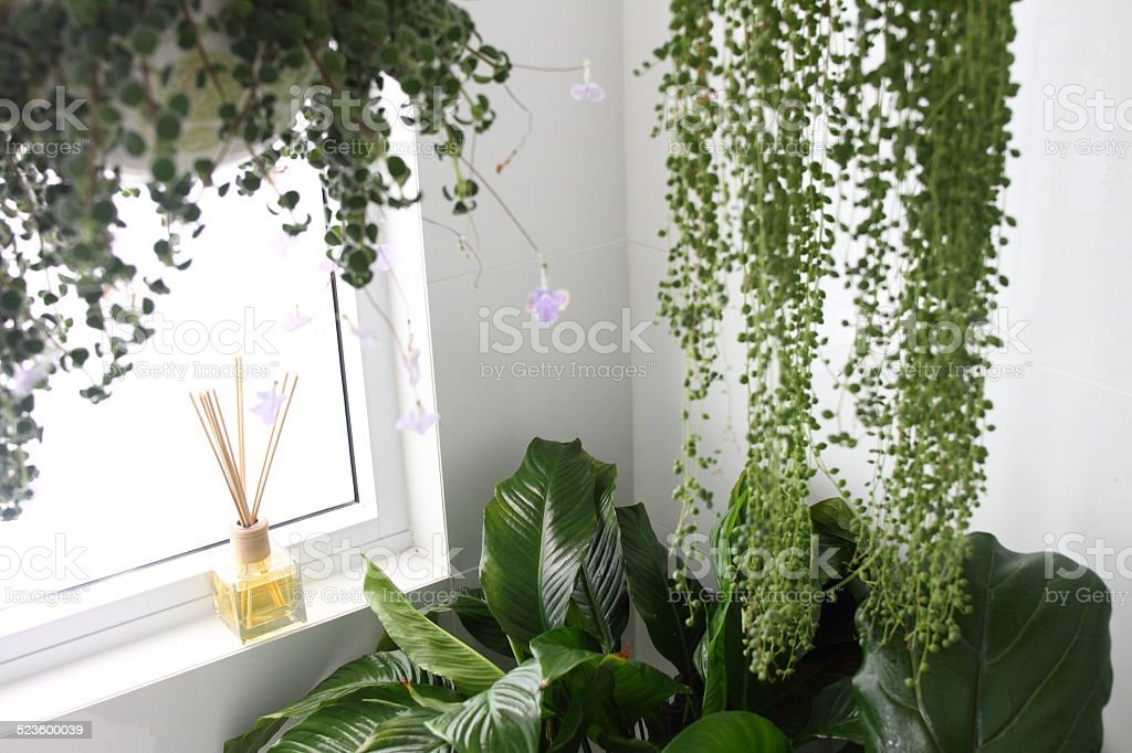 Genial Bathroom With Hanging Plants Royalty Free Stock Photo
