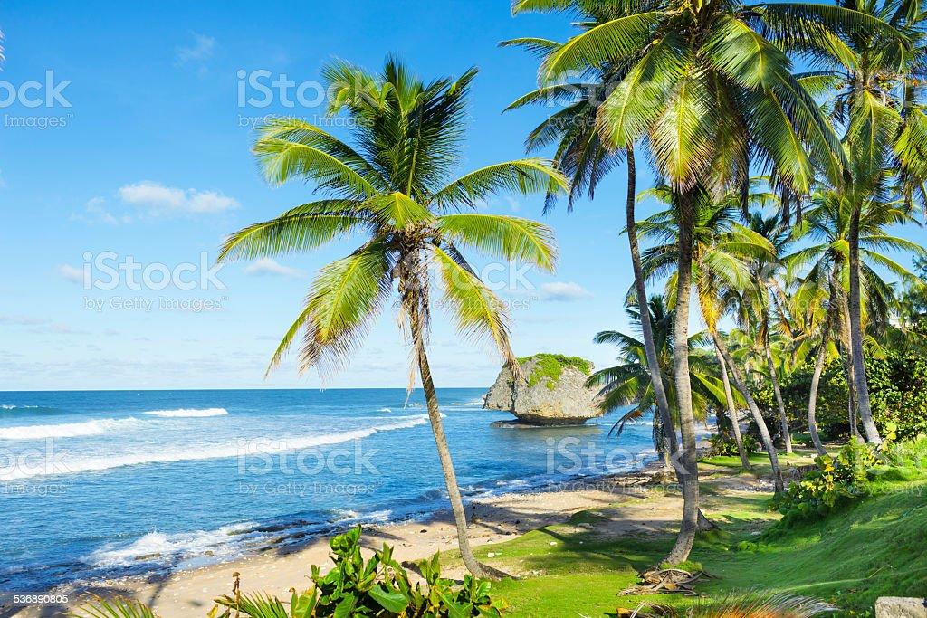 Bathsheba Beach, Barbados - foto de acervo