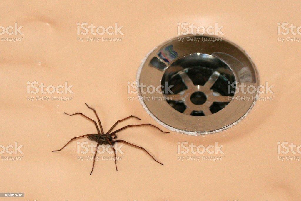 Bathtime Creep.... stock photo