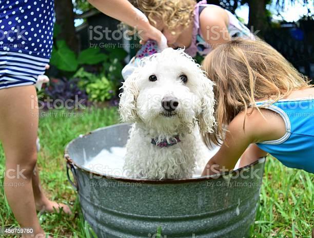 Bathtime for fido picture id486759760?b=1&k=6&m=486759760&s=612x612&h=jqvp6wzsfkuc0rxijyuqqlnlhwarsj16d05sijlqoum=