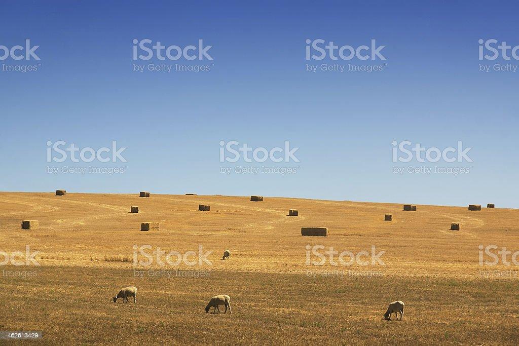 Bathurst Farmland stock photo
