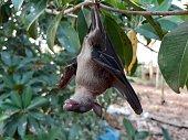 istock Bats are often found in the tropics. 1203082970