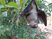 istock Bats are often found in the tropics. 1203082974