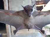 istock Bats are often found in the tropics. 1203082976