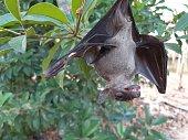 istock Bats are often found in the tropics. 1203082978