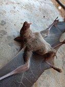 istock Bats are often found in the tropics. 1203082980