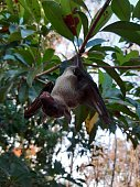 istock Bats are often found in the tropics. 1203082987