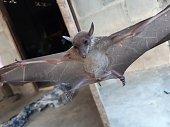 istock Bats are often found in the tropics. 1203082991