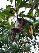 istock Bats are often found in the tropics. 1203082992