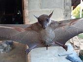 istock Bats are often found in the tropics. 1203082999