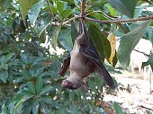 istock Bats are often found in the tropics. 1203083002