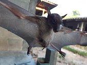 istock Bats are often found in the tropics. 1203083004