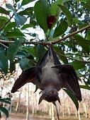 istock Bats are often found in the tropics. 1203083011