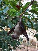 istock Bats are often found in the tropics. 1203083018