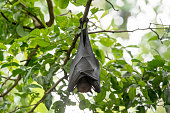 istock Bats are sleeping by turning them upside down. 1209772031