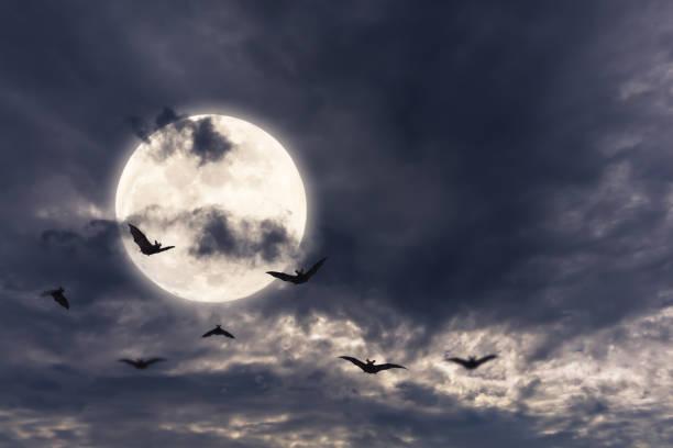 chauves-souris autour de la pleine lune - pleine lune photos et images de collection